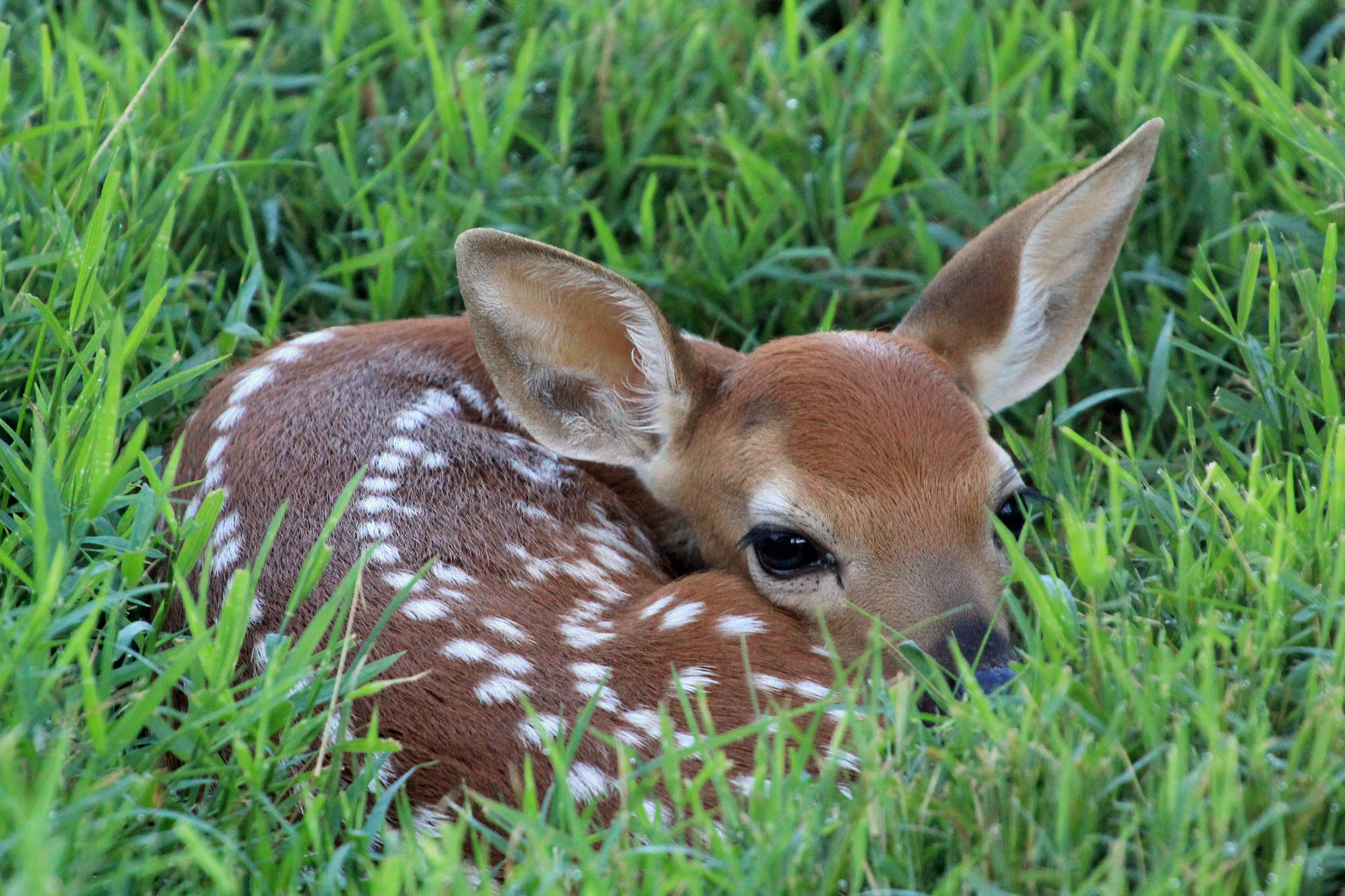 Press Release 7/2/2019 – Wildlife Watch: Fawns - City of Alamosa